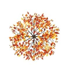 autumn tree top view vector image