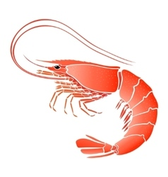 Cooked shrimp isolated on white vector