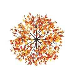 autumn tree top view vector image