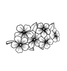 blossoming tree in graphic black white vector image vector image