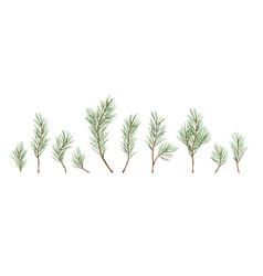 designer elements set of green pine branches vector image