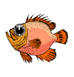Sketch of rockfish vector