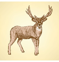Sketch cute deer in vintage style vector