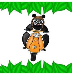 Panda in helmet goes on scooter in leaves frame vector image