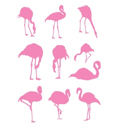 Flamingos pink vector