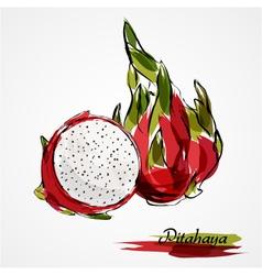 Pitahaya fruits vector