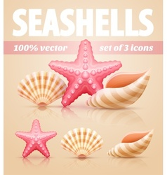 Set of summer sea shells and vector image