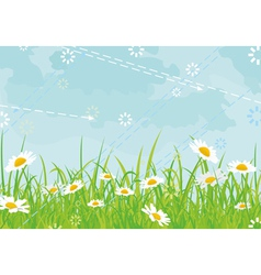 Daisy field background vector