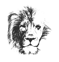 lion head hand drawn vector image