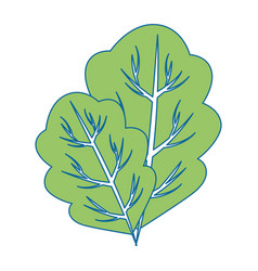 Lettuce leaf icon vector