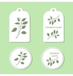 Camphor laurel branch vector image