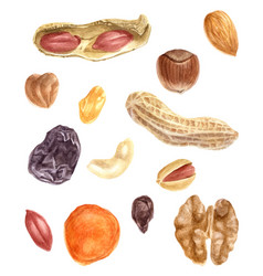 Nuts and dried fruits watercolor set vector