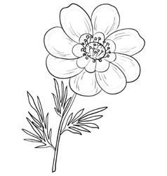 Flower adonis contours vector