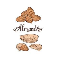 Almondshand drawn vector