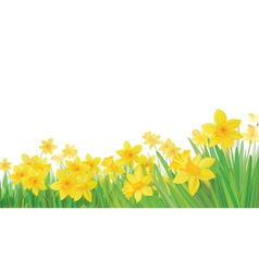 Daffodil flowers vector