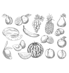 Enjoyable flavorful fresh fruits sketch icons vector