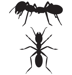 Silhouette ant vector image