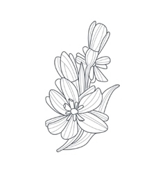 Daffodil flower monochrome drawing for coloring vector
