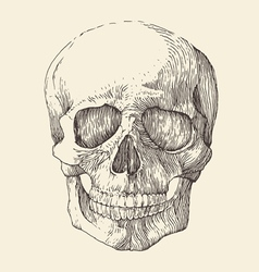 human skull vintage engraved retro vector image