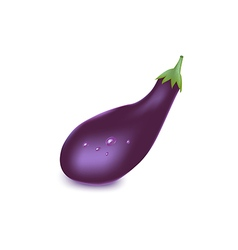 Ripe eggplant isolated on white background vector