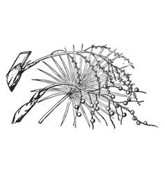 Branch of brittle thatch palm vintage vector