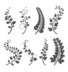 Curly branches with leaves silhouettes on white vector image