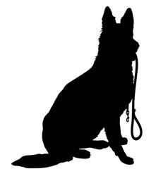 Shepherd with Leash vector image vector image