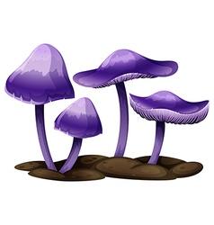 Purple mushrooms vector