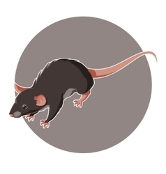 Isometric rat icon vector