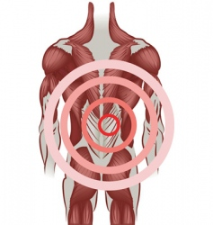 human back muscles vector image