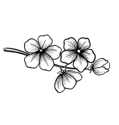 Blossoming tree in graphic black white style vector