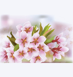 Cherry blossom branch spring delicate flowers vector