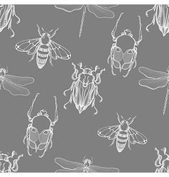 Hand drawn engraving Sketch of Scarab Beetle May vector image