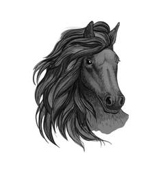 Black horse with passionate glance portrait vector