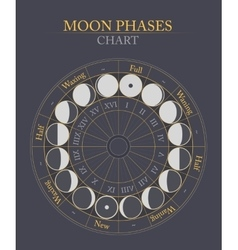 Moon phases flat background vector