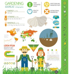 Gardening work farming infographic garlic graphic vector