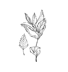 mint drawing set isolated mint plant and vector image