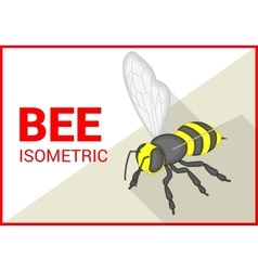 Bee isometric flat 3d vector image