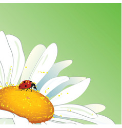 daisy and ladybird vector image vector image