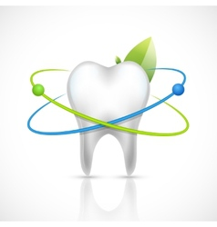 Healthy tooth realistic vector