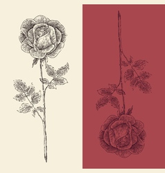 Rose flower vintage engraved retro vector