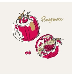 drawing of a stylized pomegranate vector image vector image