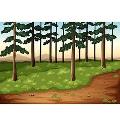Pine trees vector