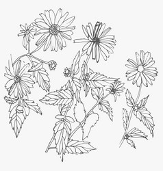set of hand drawn flowers isolated on white vector image vector image