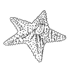 starfish realistic sketch sea star isolated on vector image vector image