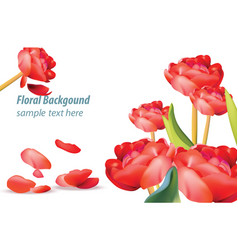 Red tulip flower background spring season vector