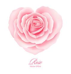 Rose flower in heart shape vector