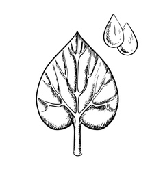 Heart shaped sappy leaf and water drops vector
