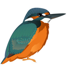 Common kingfisher cartoon bird vector