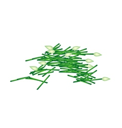 Fresh chopped garlic chives on white background vector